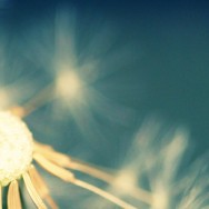 Dharma Inquiry: Light on Liberation – 26th July to August 1st.